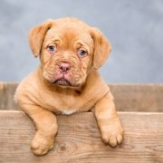 hondenverzekering afsluiten